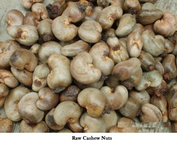 Buy CASHEW NUT