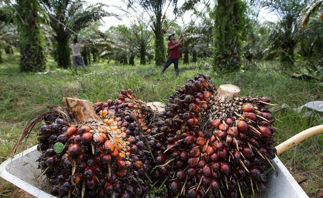 Buy Crude Palm Oil