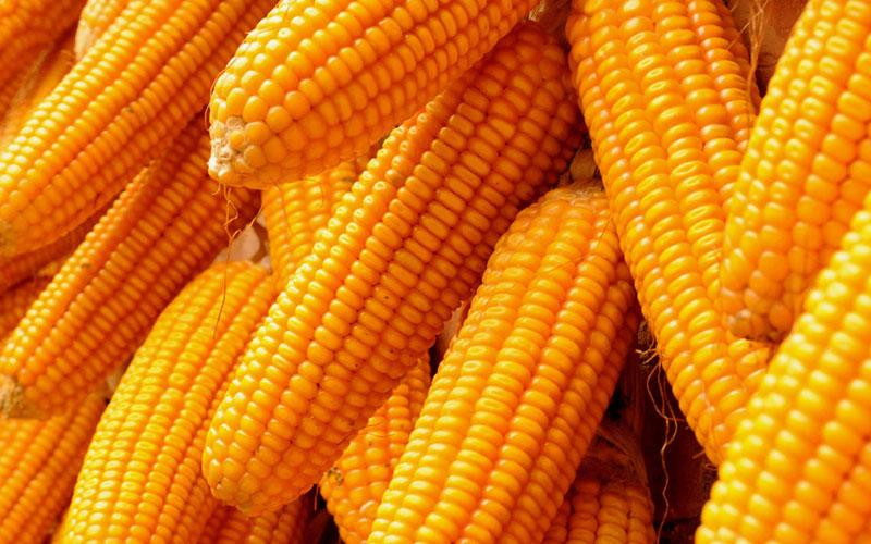 Buy Corn.