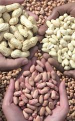 Peanuts and Peanut ingredients