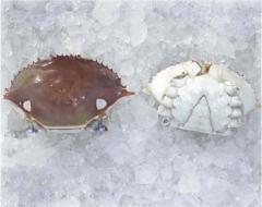 Crab Body