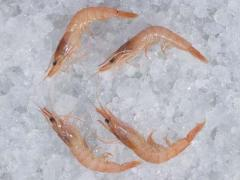 Head-On Cappa Shrimp