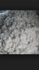 Raw cotton - Lanny scot ventures