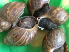 Snails (Escargots)