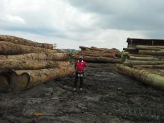 African hardwoods sawn and logs