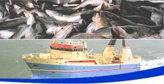 Sea Food Products