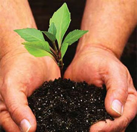 Order Tree Planting