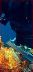 Sub-sea Repair Services